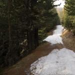 Entang der Forststraße zwischen Almrausch- und Linderhütte